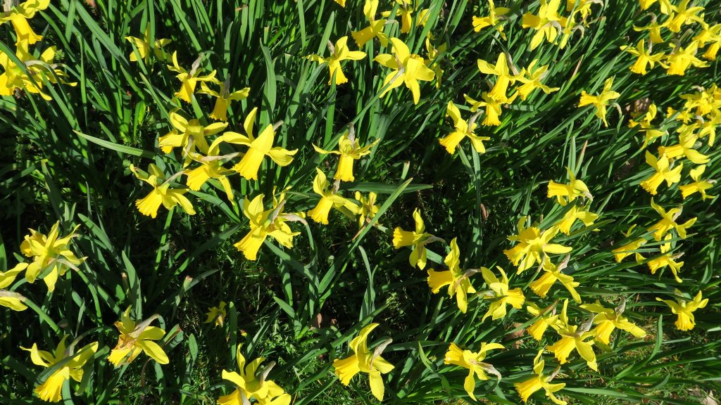 Pasen-voorjaar-DenHaag