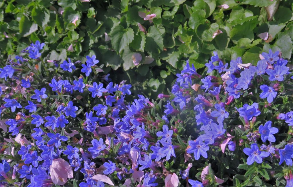 blauw-natuur-DenHaag-AvLCouture
