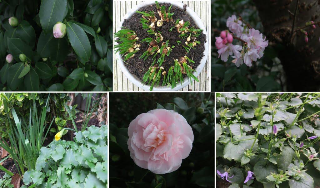 januari-lente-bloemen-AvLCouture